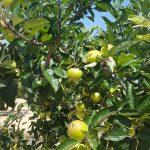 Avanzando en la Agricultura 4.0 por un Desarrollo Sostenible
